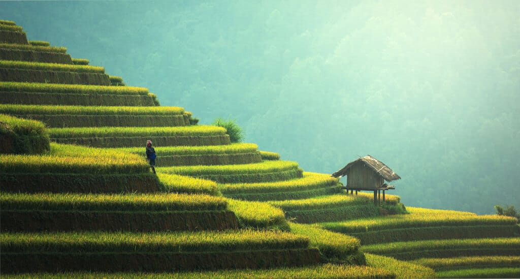 Island-to-Visit-Bali-Rice-Terrace